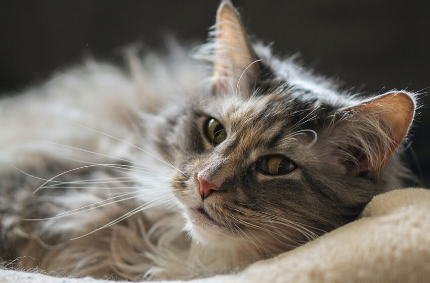 5 types of leaders (as explained by cats)